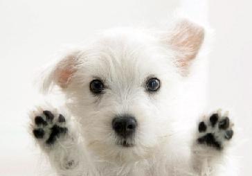Don T Let Your Pet Control Your Plans
